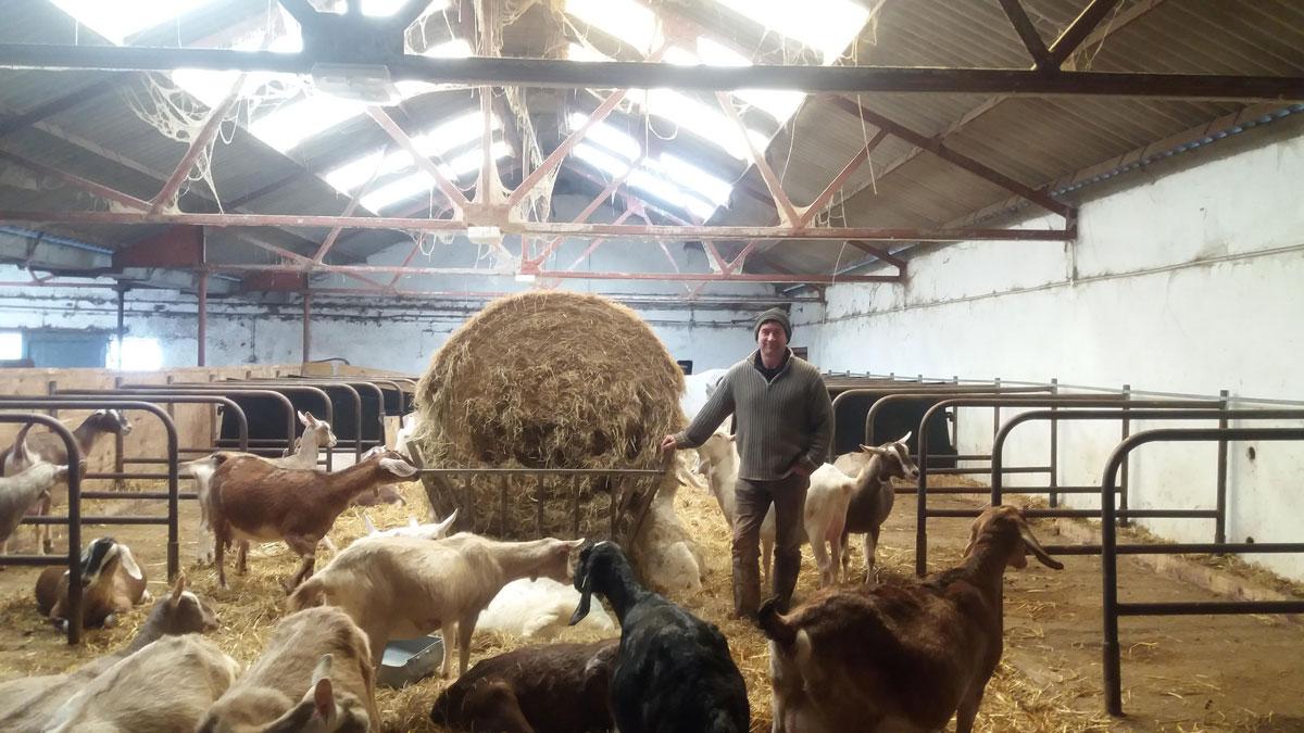 Goats' dung could give farm renewable power | Totnes Renewable